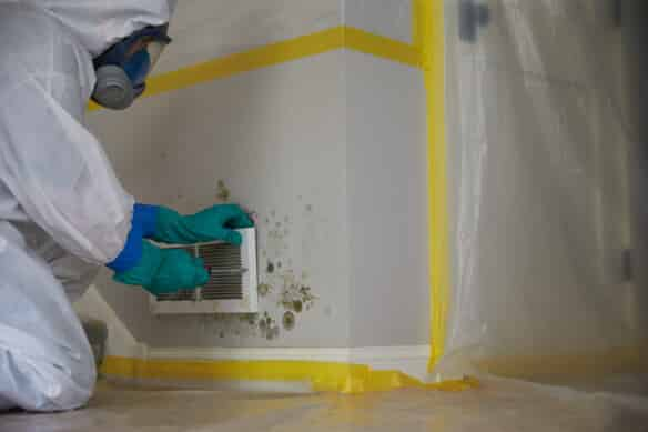 Specialist Removing Mold