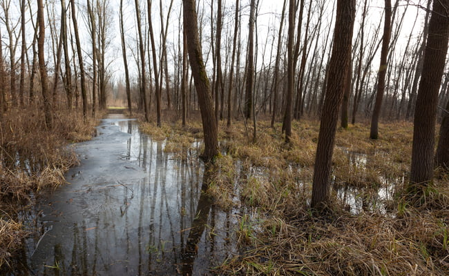 groundwater flooding in forest