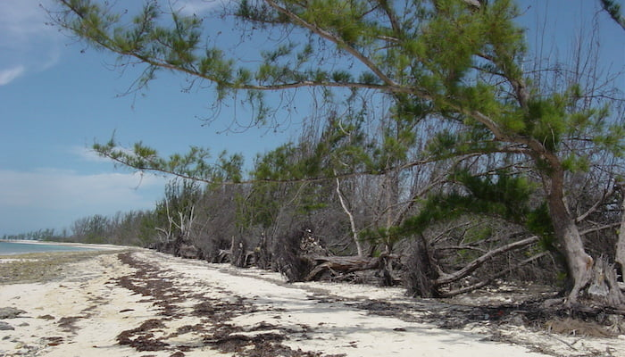 hurricane ivan damage in 2004