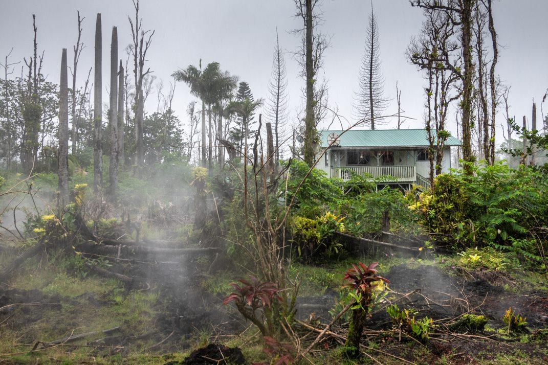Fallen trees after a hurricane