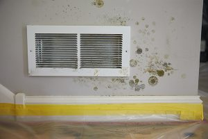 Mold on a wall vent