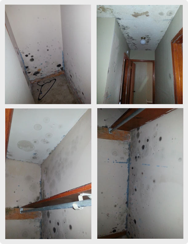 mold on walls and cieling