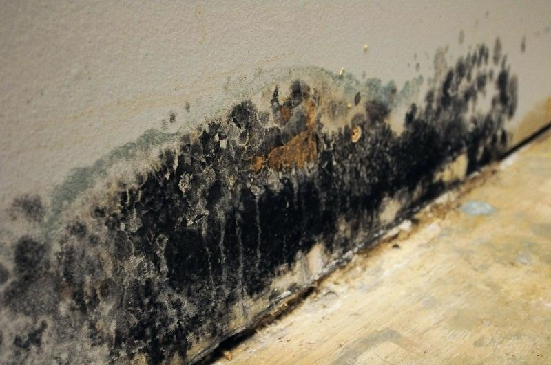 Black mold on the bottom of a wall in Prescott Valley home