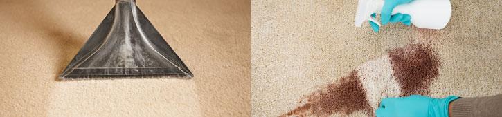 Vacuum and carpet cleaning