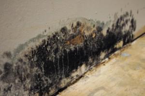 mold on drywall near floor