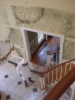 Mold Remediation Mesquite TX