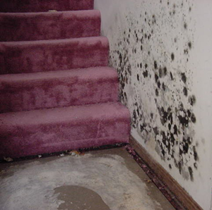 Mold on a wall next to a staircase